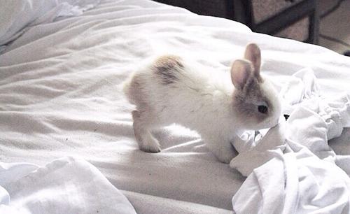 En périodes difficiles, consolons nous avec des bébés lapins.