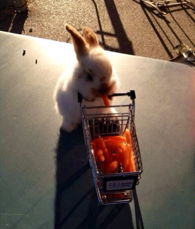 Because life is rough, here's a bunny.