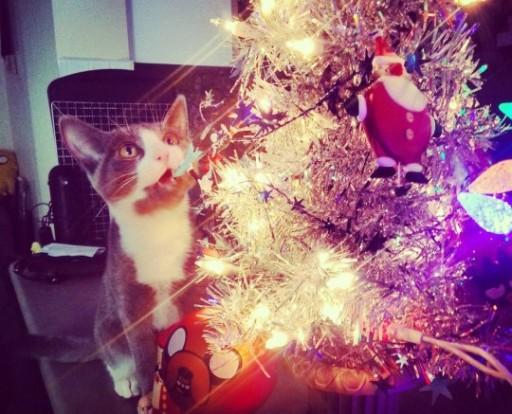 Pour vous motiver, un chat de Noël. Au mois de Mars. YOLO